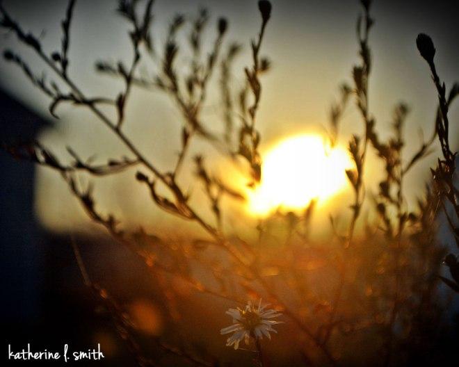 sunflower-01